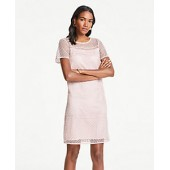 Lace T-Shirt Shift Dress