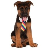 Rubies Costume Company Rainbow Tie for Pet
