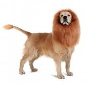 OMG Adorables Lion Mane for Dog